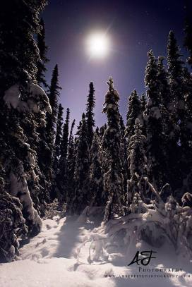Fairbanks winter scene by Amber Fite! Web: http://www.amberfitephotography.com/ Facebook:
