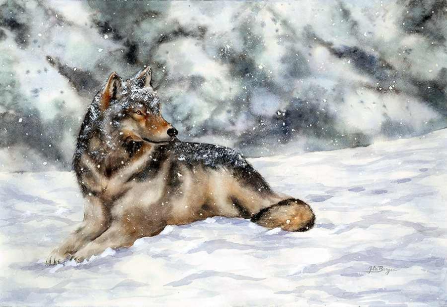 Winter Wolf (72 dpi)